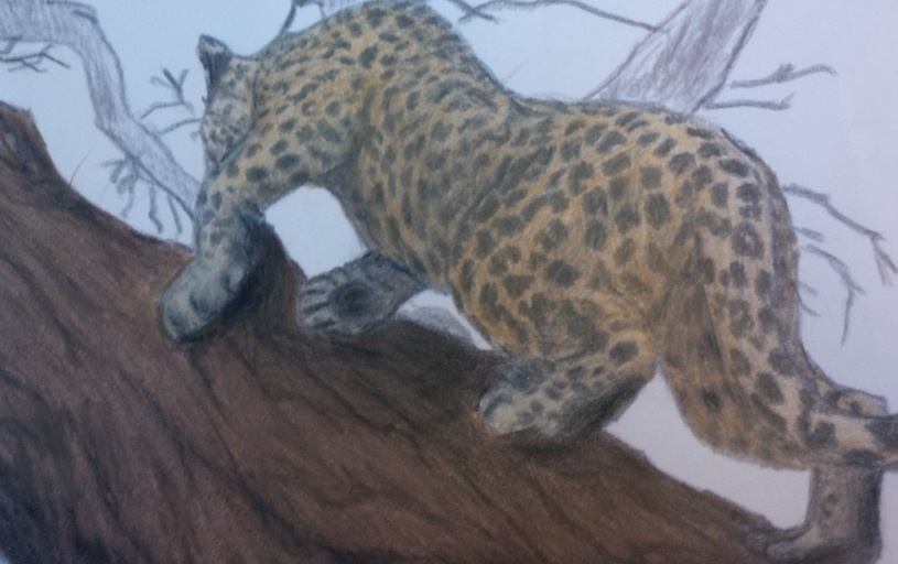 a drawing of Zanzibar Leopard